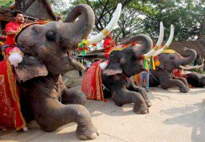Национальный день тайского слона