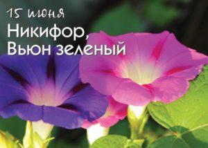 Никифор Дубодёр